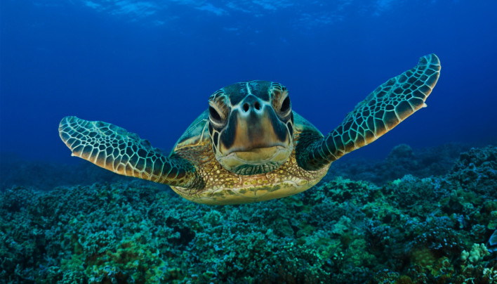 15 Pictures – Sea Turtles