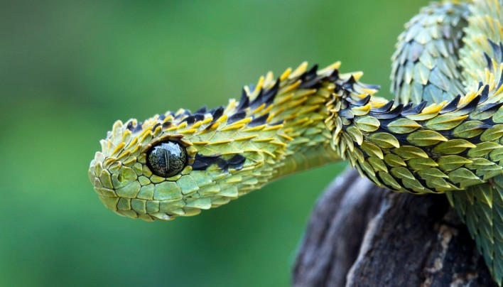 15 Pictures – Snakes